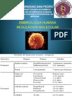 Regulacion Molecular