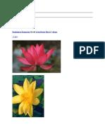 ramkissoon ramnarine shared lotus divine flower8