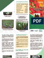 Brochure Produccion Fresas Hidroponico