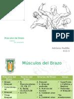 Musculos Del Brazo 1.2 Expo ANPG