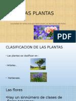 Las Plantas - Flores
