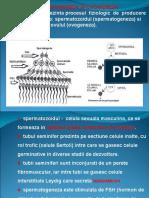 Docslide.us Spermatogeneza Si Ovogeneza Ppt