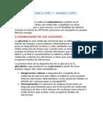 13.Catabolismo y Anabolismo