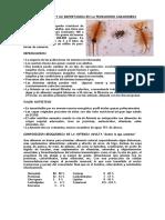 Artemia Salina y Su Importancia