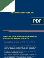 Respiracion Celular ST