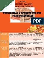 99441190 Origen Real Y Aparente de Los Pares Craneales Presentacion