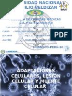 Adaptaciones Celulares, Lesión Celular y Muerte Celular