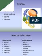 ANATOMIA Osteología Cráneo