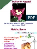 Metabolismo La Esencia de La Vida