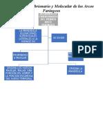 Resumen Desarrollo Embrionario y Molecular de Los Arcos Faringeos