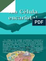 la-clula-eucariotaterminada-1199827440106934-3.ppt