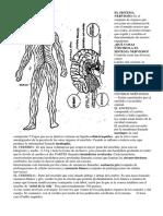 El Sistema Nervioso - 3