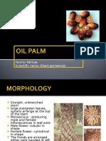 3 Oil Palm Hendry