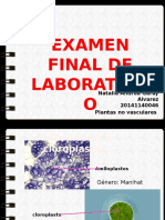 Examen Final Laboratorio