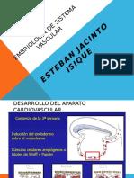 Embriologia Sistema Vascular