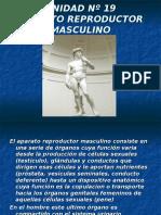 Inst. Quirúrgica - 1º Año - Anatomía - Unidad Nº19 - Sistema Reproductor Masculino