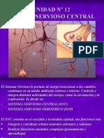 Inst. Quirúrgica - 1º Año - Anatomía - Unidad Nº12 - Sistema Nervioso Central