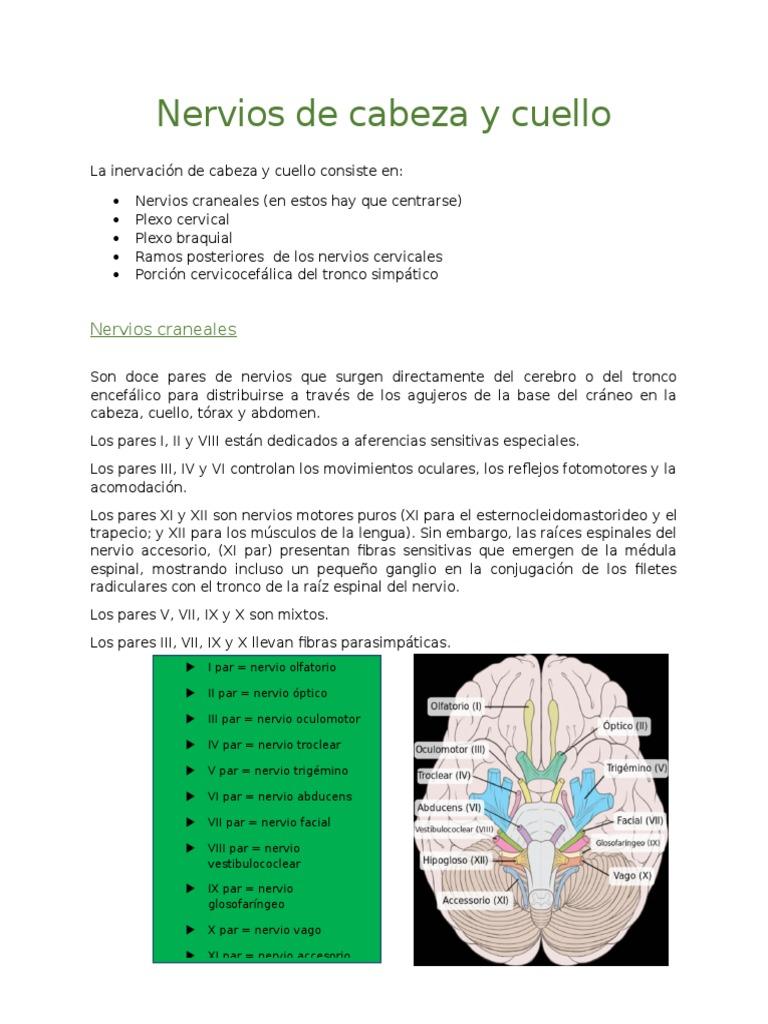 Nervios de cabeza y cuello.docx