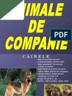 Animal e De companie