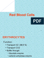 05. Red Blood Cells1