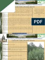 158+Caña+de+Cristo.pdf