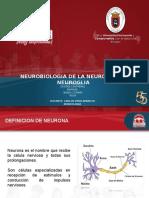 Neuronas y Neuroglias