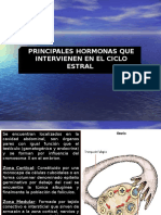 CICLO ESTRAL.ppt