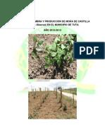Programa Siembra y Produccin de Mora de Castilla en El Municipio de Tuta