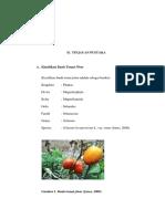 BAB II tomat plum.pdf