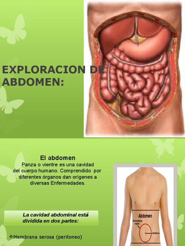 Abdomen Adriana