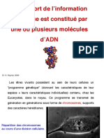 cours adn