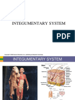 Integumentary System - Copy