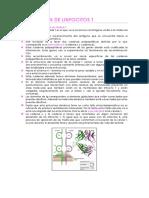 Activacion de Linfocitos T