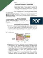 Resumen Anatomia y Fisiologia Del Sistema Respiratorio (2)