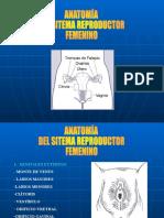 SEMINARIO GINECO