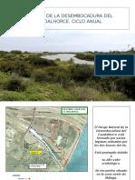 LA FLORA DE LA DESEMBOCADURA DEL GUADALHORCE-.ppsx