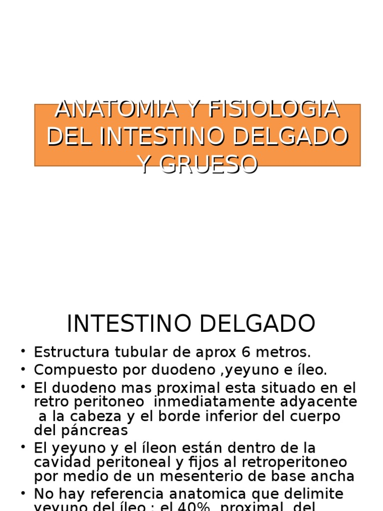 Anatomia y Fisiologia Del Intestino Delgado y Grueso