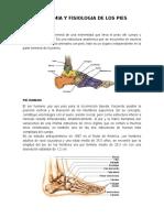 Anatomia y Fisiologia de Los Pies