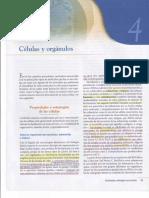Capitulo IV Células y Orgánulos