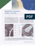 Capitulo VII Membranas Estructura Química y Funcíon