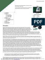 Eagle.pdf