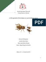 microganaderia-Entomologica