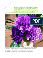Carnations Guide
