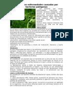 Principales enfermedades causadas por bacterias patógenas.doc