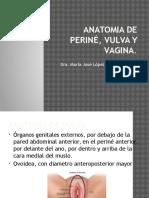 ANATOMIA DE PERINÉ, VULVA Y VAGINA.pptx