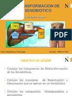 Biotransformacion de Un Xenobiotico