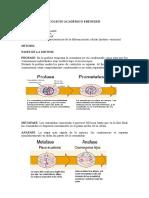 division celular.doc