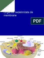 Organite nedelimitate de membrane2012-13_v01.pptx
