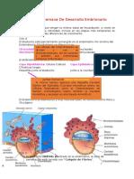 resumen histologia ross