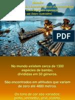 Apresentação Bambu 2014 PDF